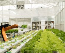 Small robotic applications in agriculture