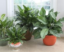 Discover the Significance of Indoor Plants