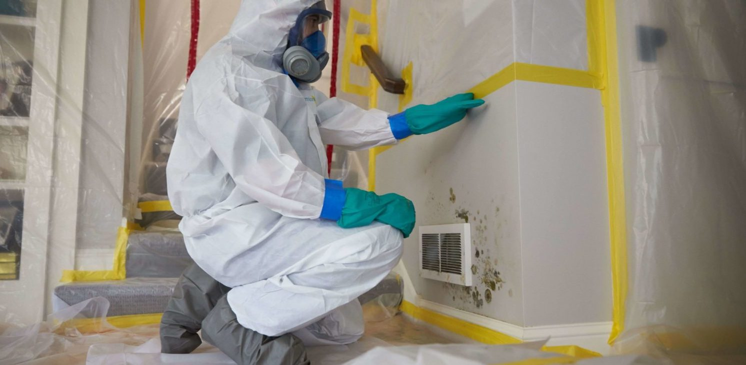 Mold Remediation Services: When Your Car Is Compromised