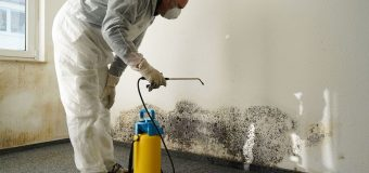 4 Reasons Why Mold Remediation Services Alpharetta Georgia Matter