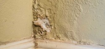 How to avoid the problem of wall mold and fungus problem in the first place?