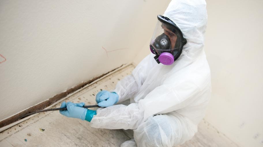The Power of Mold Remediation Services Colorado Springs Colorado