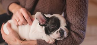 How To Stop Your Dog Chewing Things